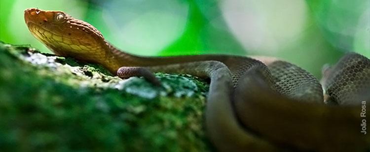 фото остров змеиный