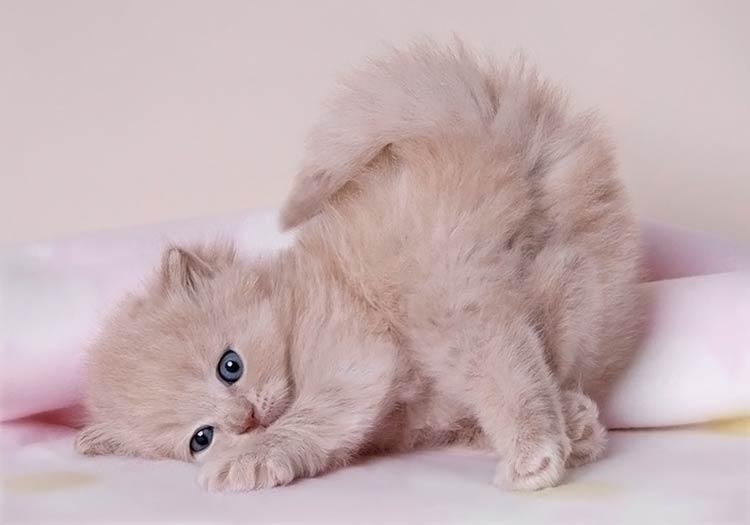 фотографии милых животных