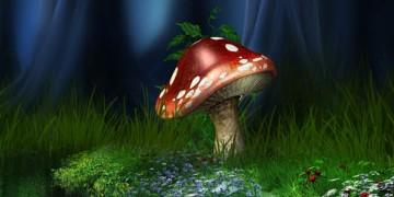 как растут грибы в лесу
