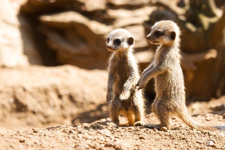 маленькие милые животные