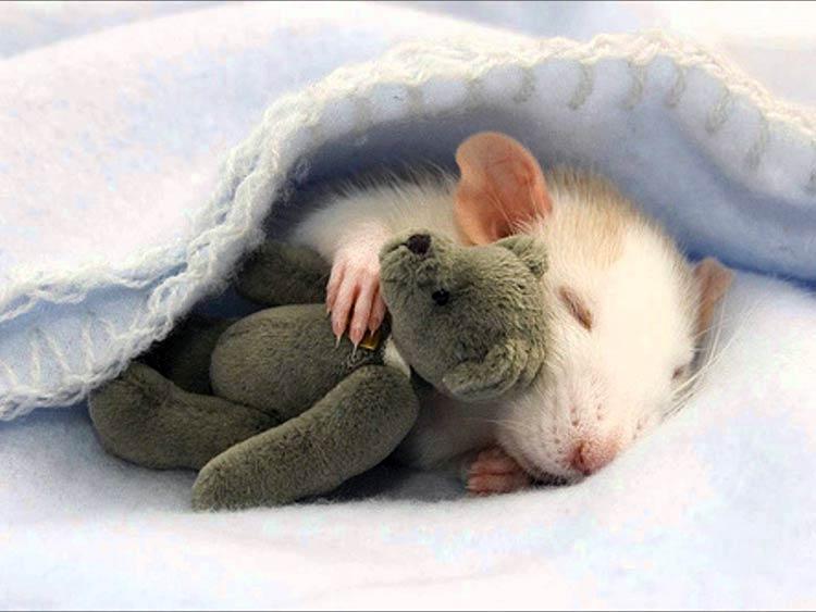 милое фото животных