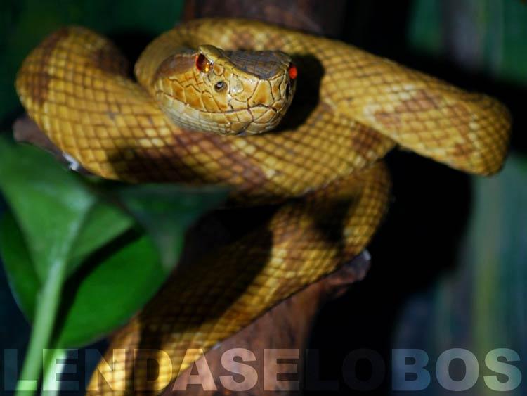 остров ядовитых змей