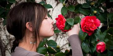 почему розы пахнут