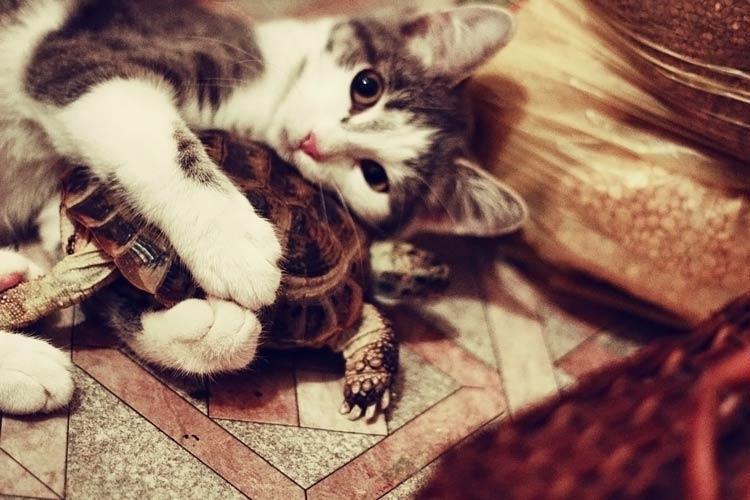 самое милое животное