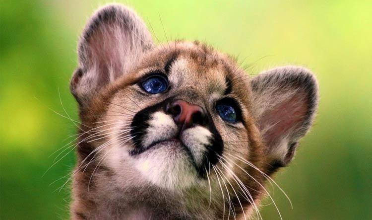 самые милые животные мира фото