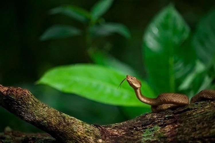 змеиный остров бразилия