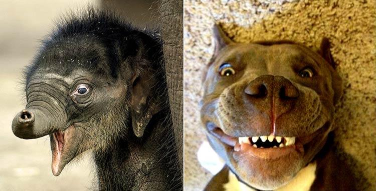 прикольные картинки со зверями