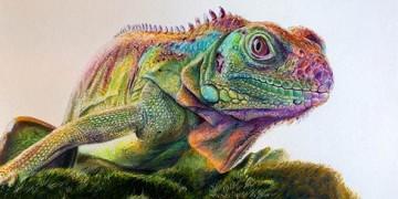 профессиональные рисунки цветными карандашами