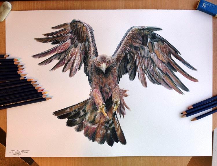 рисунки птиц цветными карандашами