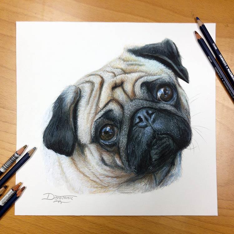 собака цветными карандашами