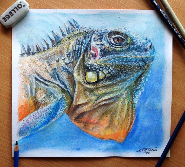 животные цветными карандашами