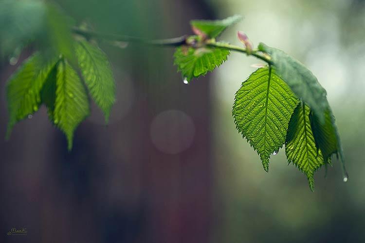 дождь фотографии природа