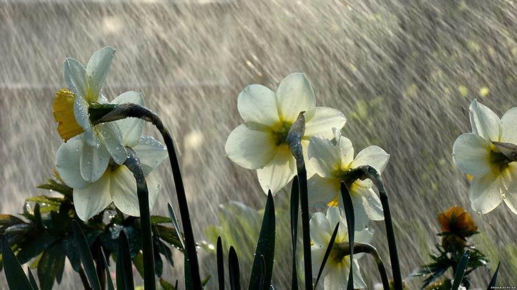 дождь мокрые цветы фото