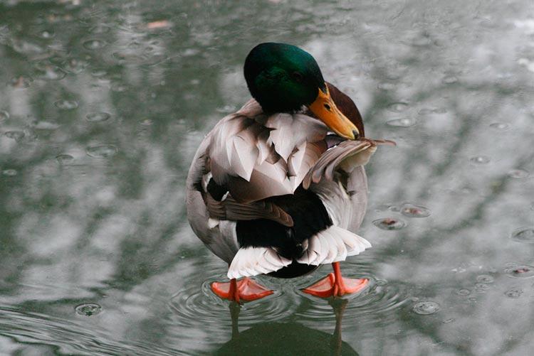 фото дождь капли птицы