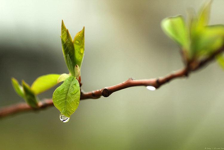 фото дождя утром