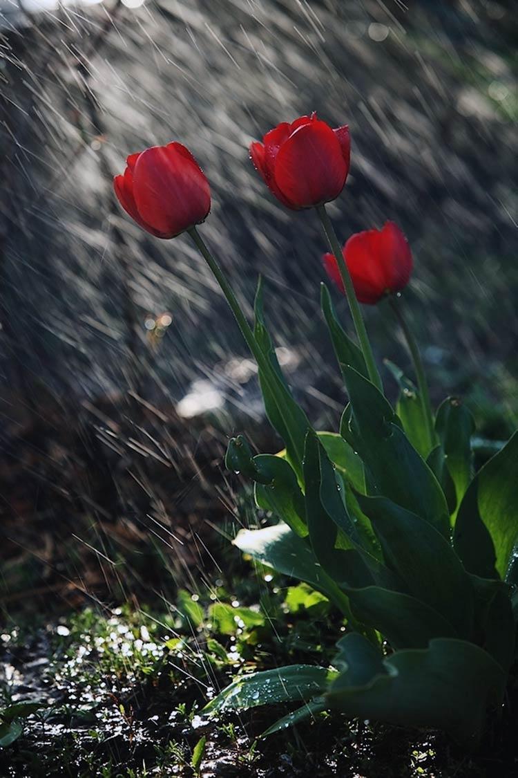 фото на тему дождь