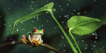 красивое видео природы
