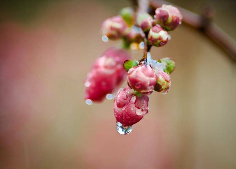 красивые фото дождя