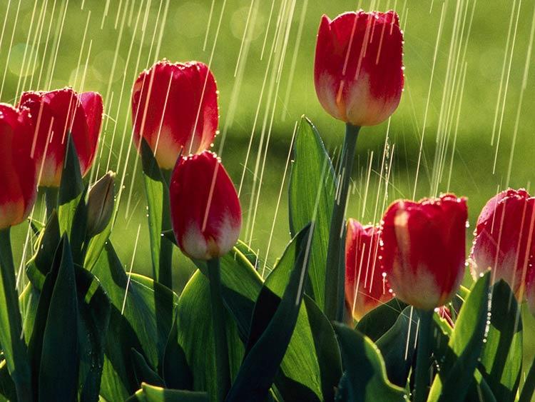 красивые фотографии дождя
