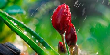 весенний дождь фотографии