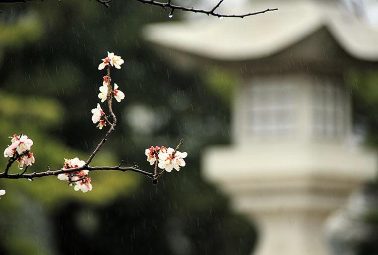 весенний дождь картинки