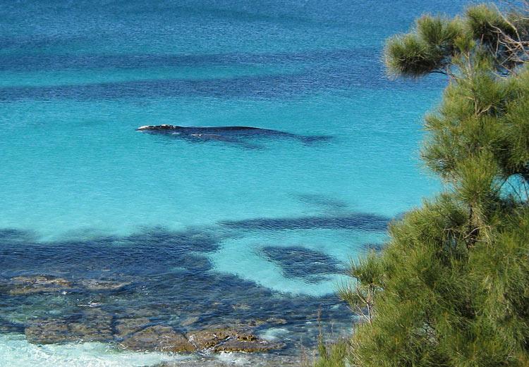 австралийский пляж hyams beach в бухте джарвис