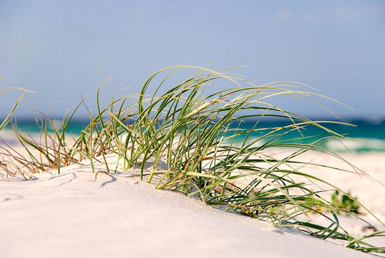белый пляж австралия