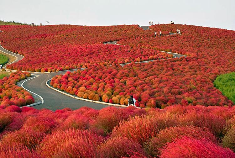 красивая природа осени пейзажи
