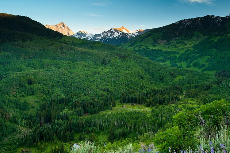 пейзажи природы лето фото