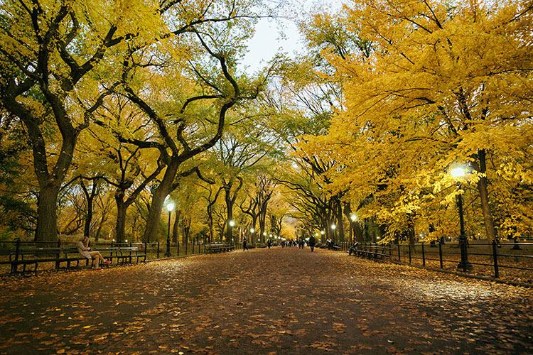 природа ранняя осень