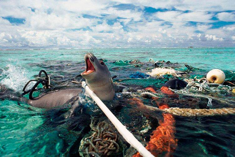 мусорное пятно в тихом океане