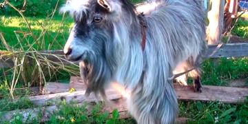 приколы видео смотреть онлайн бесплатно про животных