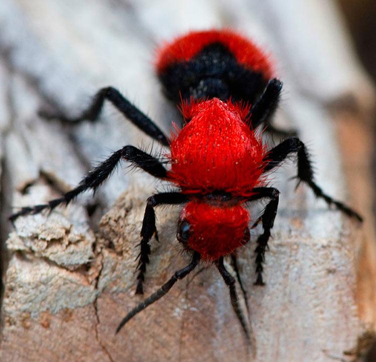 фото животных и насекомых