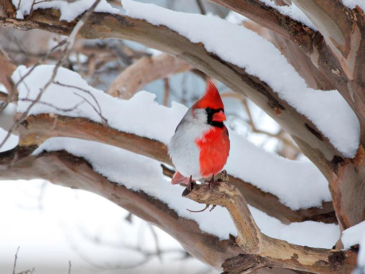 фотографии птиц смотреть
