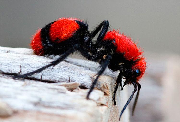 картинки животных и насекомых