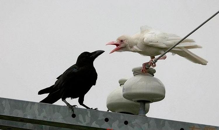 насекомые звери птицы