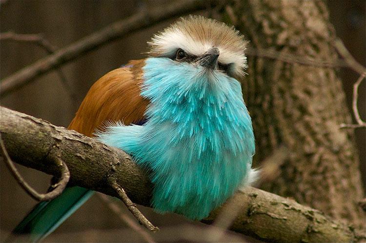 самые красивые животные фото