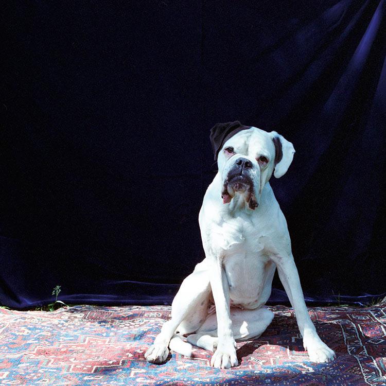 фотопортреты собак