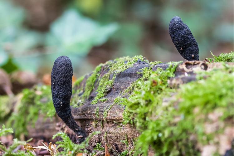 черные грибы