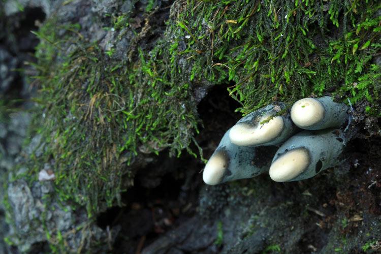фото грибов с названиями