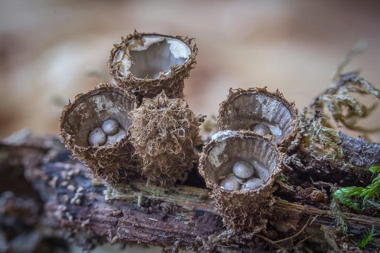 грибы названия и картинки