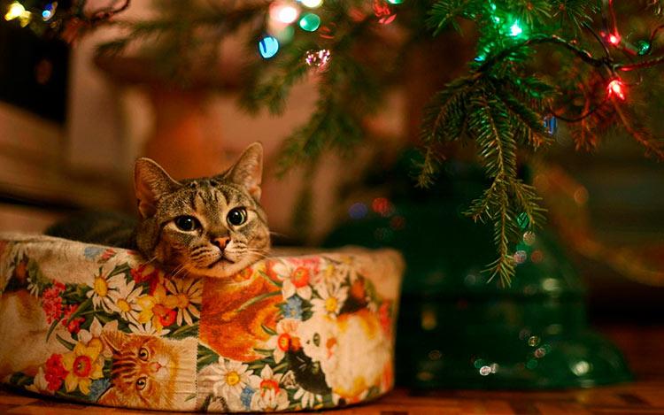 новогодний уют картинки