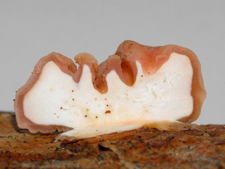 съедобные и несъедобные грибы фото
