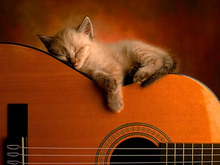 какая музыка нравится котам
