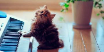 какую музыку любят собаки и коты
