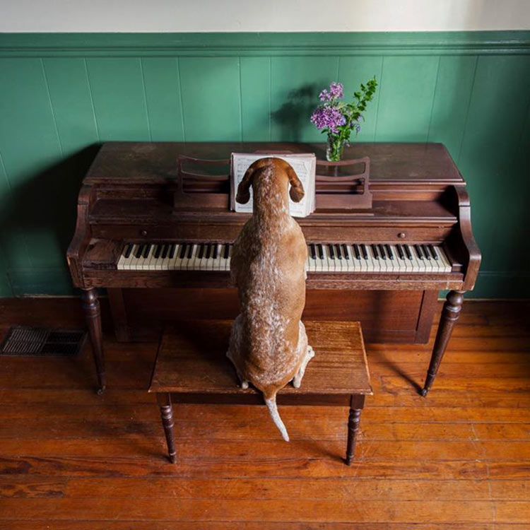 музыка которая нравится собакам