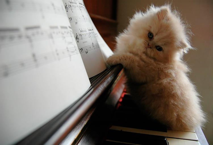 успокаивающая музыка для котов