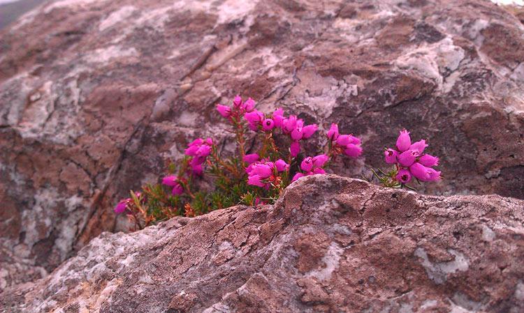 цветы ирландии