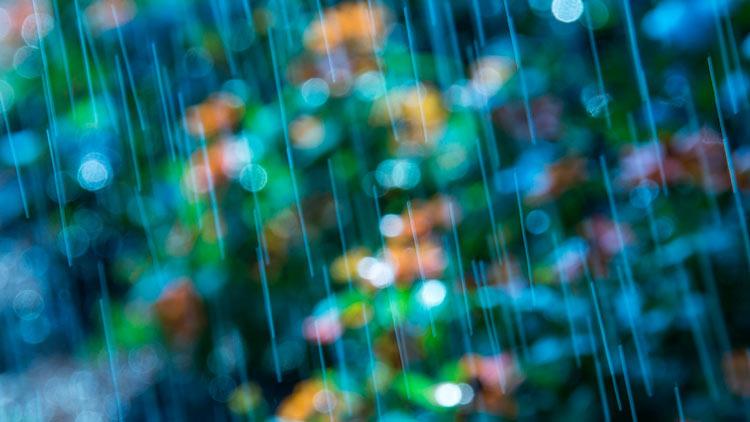 дождь в лесу фотографии