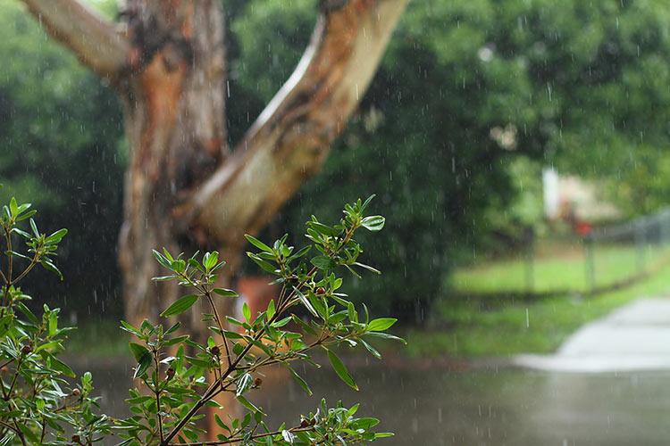 дождливая погода картинки
